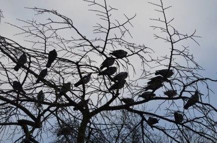 birds-in-a-tree