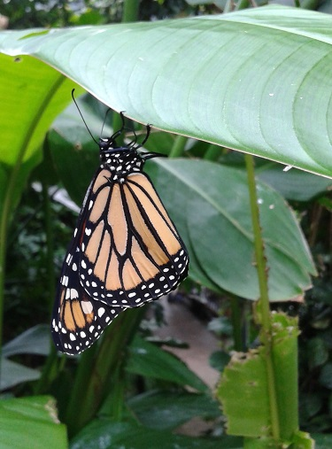 Butterflies, Psalm 27, and the Beauty of the Lord